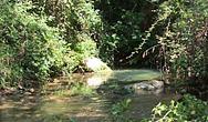 Veduta di Oasi WWF Grotte di Morigerati sul Bussento