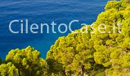 La verde pineta delle ripe rosse di Montecorice