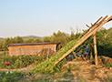 Le colture e i prodotti tipici della terra cilentana